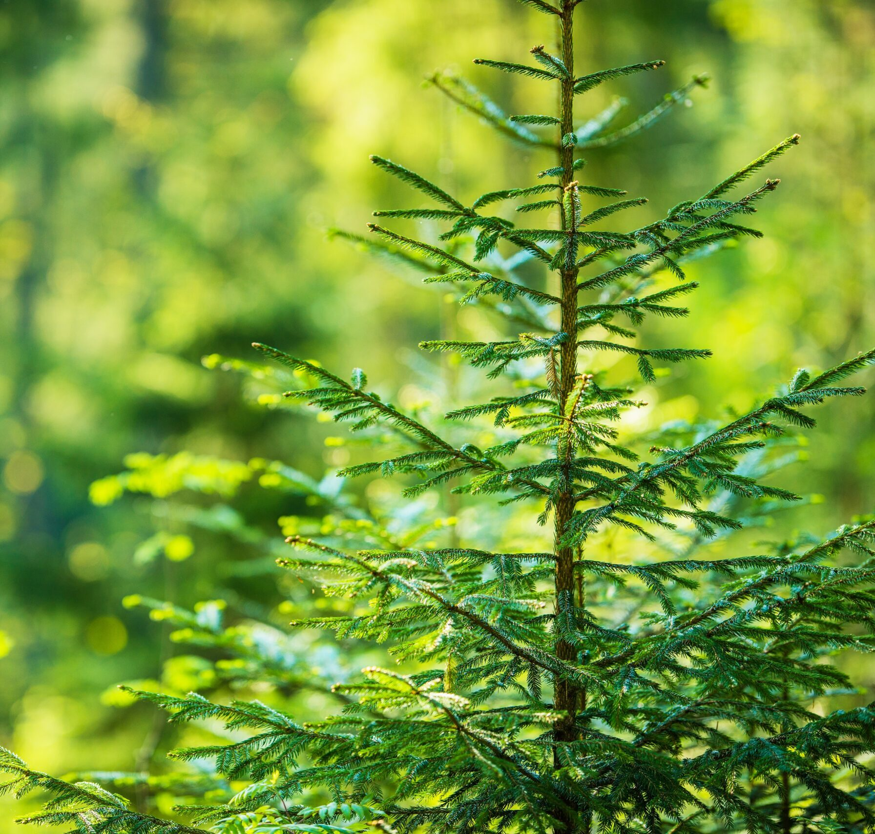 How will COVID-19 Impact Timber Investments? Part III