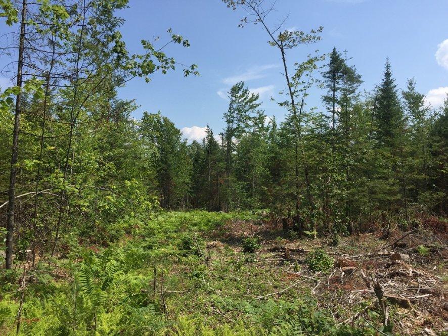 Maine, ,Land,Sold,1002